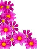 abstrakt blommaprydnad Arkivfoto
