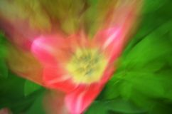 Abstrakt blommatulpan Arkivbild