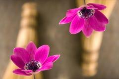 abstrakt blommor Arkivbilder