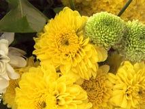 abstrakt blommor för bakgrundschrysanthemumfärg Arkivbilder