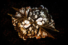abstrakt bok Fotografering för Bildbyråer