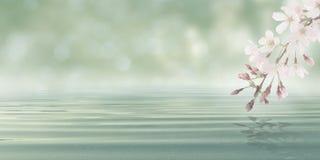 Abstrakt Bokeh bakgrundsvatten med sidor och blommor från blomningväxten Royaltyfri Fotografi