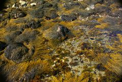 abstrakt brun kelpyellow Arkivfoton