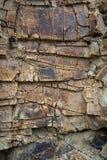 Abstrakt brun stenbakgrund Arkivbilder
