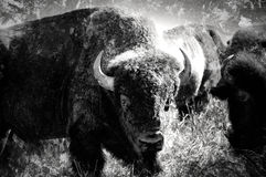 abstrakt buffel oklahoma Royaltyfri Fotografi