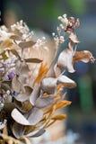 Abstrakt bukett av torkade blommor, suddighetsfokus Arkivbild