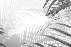 Abstrakt cień palma opuszcza na białym tle czarny white zdjęcia royalty free