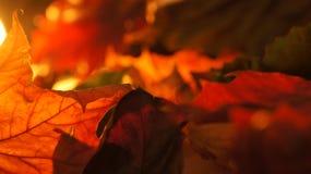 Abstrakt Closeup av olika Autumn Fall Leaves i aftonljusbakgrund arkivfoto