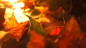 Abstrakt Closeup av olika Autumn Fall Leaves i aftonljusbakgrund arkivbild