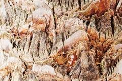 Palmträdcloseup Arkivfoto