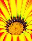 abstrakt closeupblomma Arkivfoton