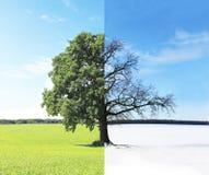 Abstrakt collage med blandade olika sidor av trädet arkivfoto