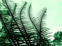 abstrakt cycadväxt Arkivbild