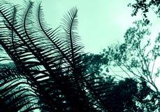 abstrakt cycadväxt Royaltyfri Bild
