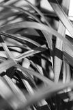 Abstrakt czarna trawa Obrazy Royalty Free