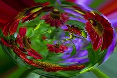 Abstrakt, czerwień kwitnie w kapsule obraz stock