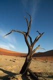 abstrakt död modern tree Arkivfoton