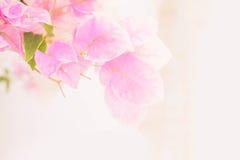 Abstrakt de som fokuseras av pappers- blommor Arkivbild