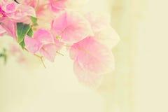 Abstrakt de som fokuseras av pappers- blommor Arkivfoton