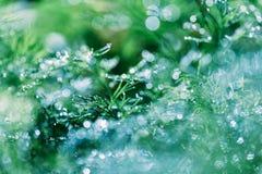 Abstrakt defocused suddig naturlig blom- grön bakgrund med härlig bokeh, dagg på gräs arkivbilder