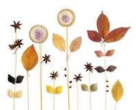 Abstrakt dekorativ bakgrund med stjärnaanis, pasta, kakor a Royaltyfri Foto