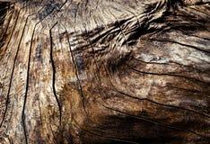 Abstrakt detalj av en gammal stubbe Arkivbild