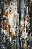 Abstrakt detalj av en gammal trädstam Arkivbild