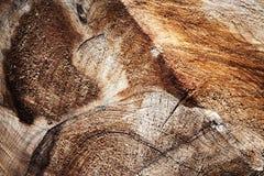 Abstrakt detalj av klippt trä Royaltyfria Foton