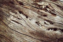 Abstrakt detalj av torrt trä Royaltyfri Fotografi