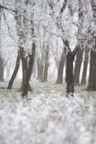 abstrakt detaljerad skog fryst vinter Arkivfoton