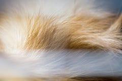 Abstrakt djur bakgrund, päls av brunt pomeranian Fotografering för Bildbyråer