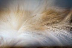 Abstrakt djur bakgrund, päls av brunt pomeranian Arkivfoton