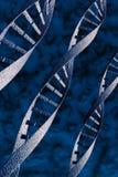 abstrakt dna-spiralmodell Arkivfoto