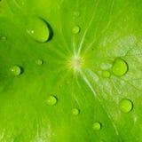 Abstrakt droppe på det gröna bladet Fotografering för Bildbyråer