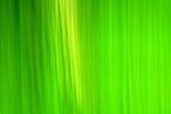 abstrakt ekologigreen Royaltyfri Fotografi
