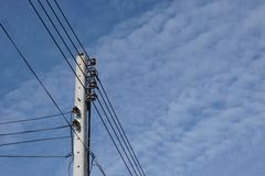 Abstrakt elektrisk tråd med fågeln Arkivbild