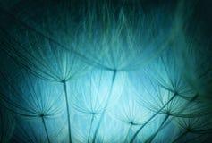 Abstrakt färgmakrofoto av maskrosfrö Arkivbild