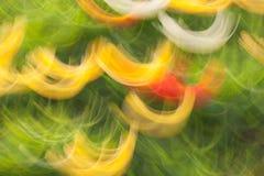 Abstrakt färgrik bakgrund av suddiga för gräsplan, vita och röda slaglängder för guling, Royaltyfria Foton