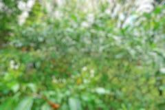 Abstrakt färgrik bakgrund, bokeh tänder bakgrund för härlig jul eller för det nya året Royaltyfria Foton