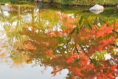 Abstrakt färgrik reflexion av vibrerande japanska höstlönnlöv på dammvatten Royaltyfri Bild