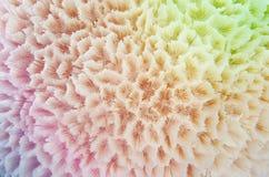 abstrakt färgrik textur Royaltyfria Bilder