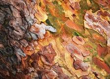Abstrakt färgrikt skäll av sörjaträdet Royaltyfri Bild