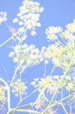 abstrakt fennel arkivbilder