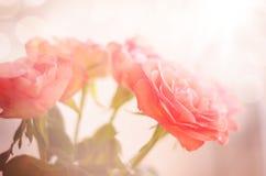 Abstrakt filial av rosa rosor Royaltyfri Bild