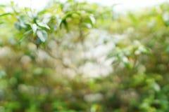 Abstrakt filial och tjänstledighetbakgrund, suddiga blommor som en bakgrund Uddejasmin, uddegardenia, utrymme för text i mall B Royaltyfri Foto