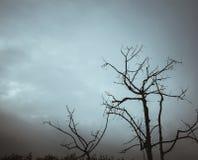 Abstrakt filial på mörk himmel Arkivfoton