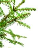 abstrakt filialpäls isolerade treewhite Royaltyfria Bilder