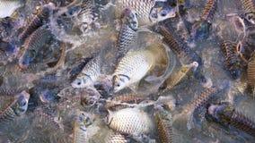 Abstrakt fisk i pölen Royaltyfria Foton