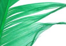 abstrakt fjädergreentextur Arkivbilder