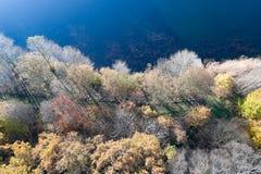 Abstrakt flyg- fotografi av en höstlig kulör skog på kanten av en yttersida för blått vatten av ett litet damm Royaltyfria Bilder